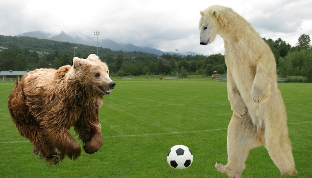 Polar-Bear-vs-Grizzly-Bear